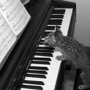 Обучу нотной грамоте и игре на фортепиано
